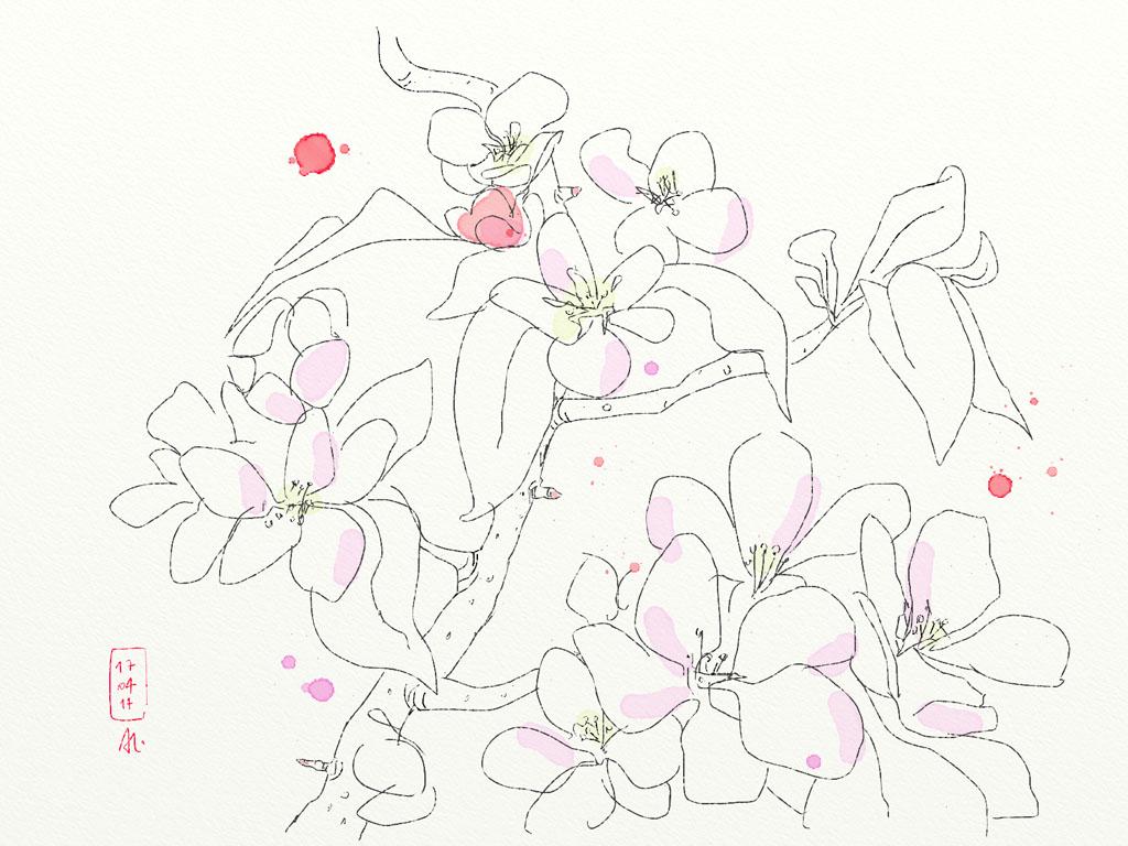 14-04-17_Apfelbluete-