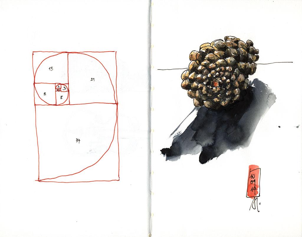 14-09-10_Fibonacci-Zapfen-