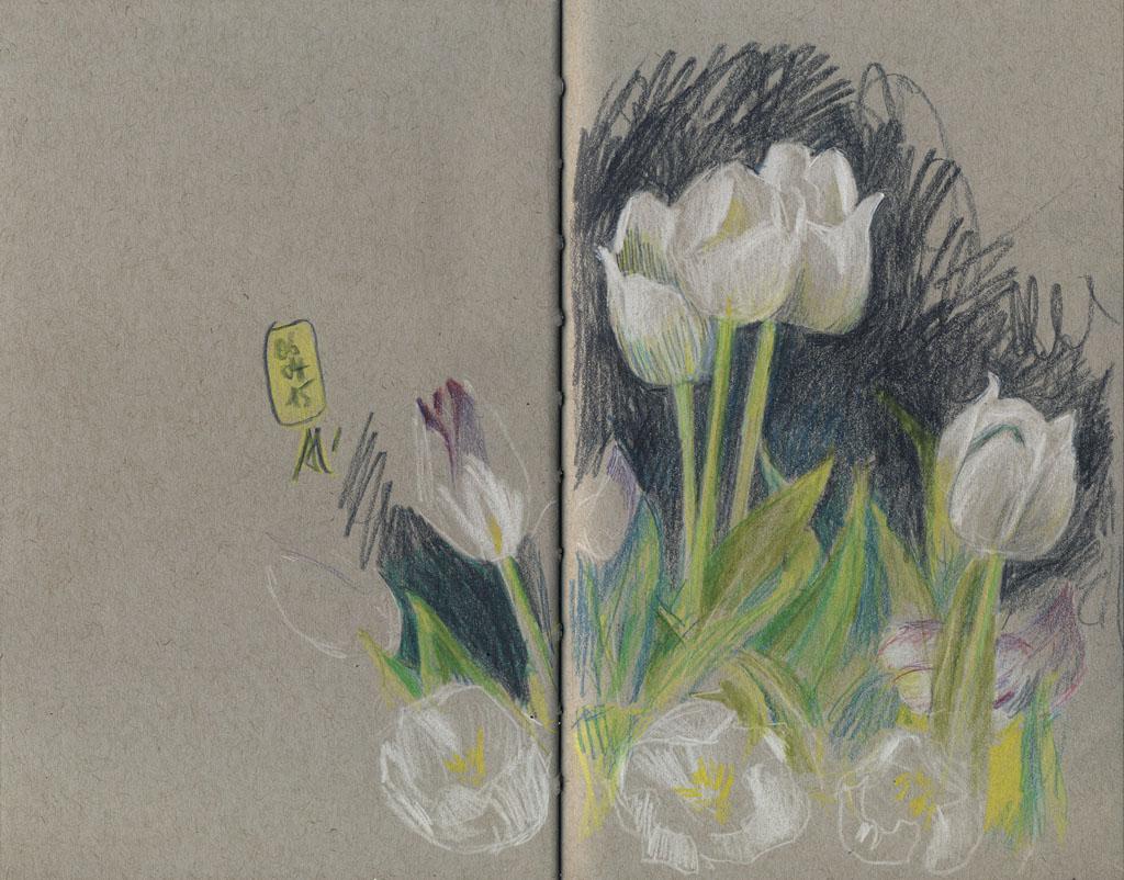 15-04-06_Tulpen-