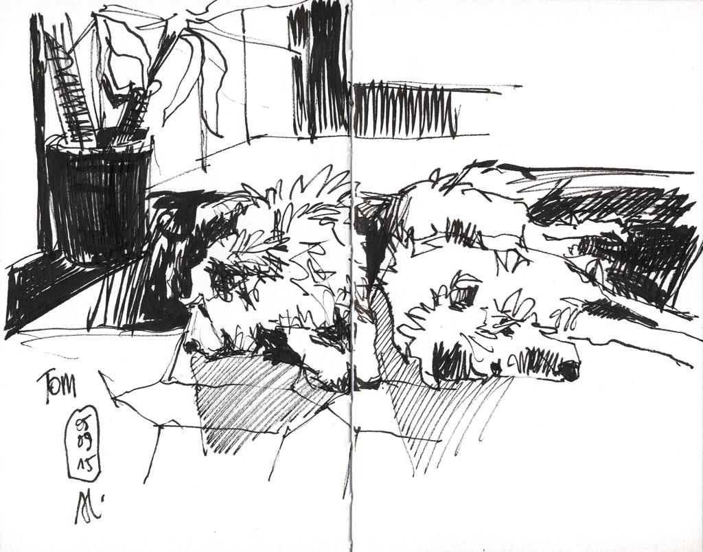 15-09-05_Tom-