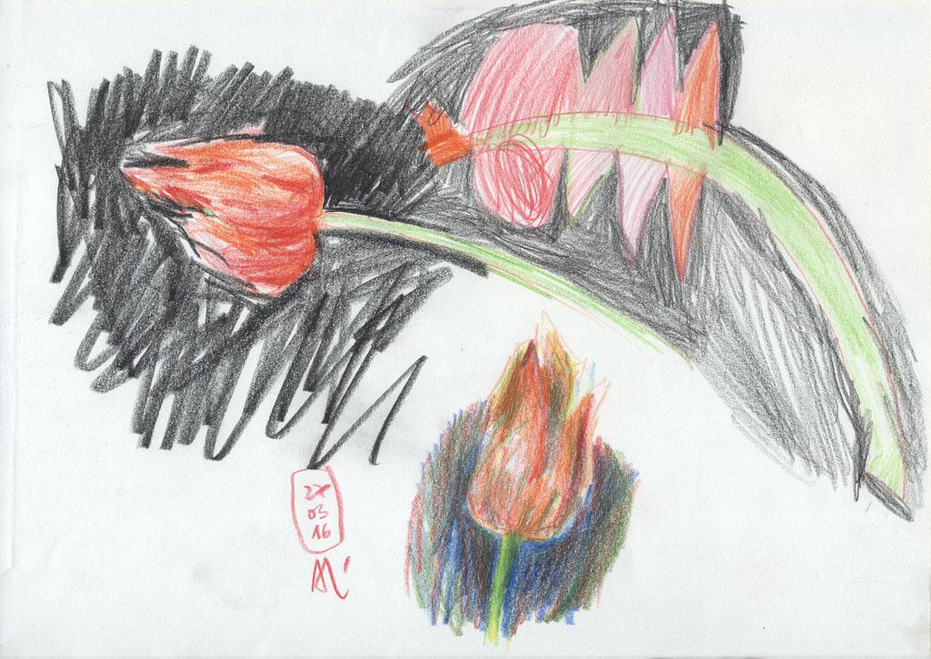 16-03-27_Tulpen-