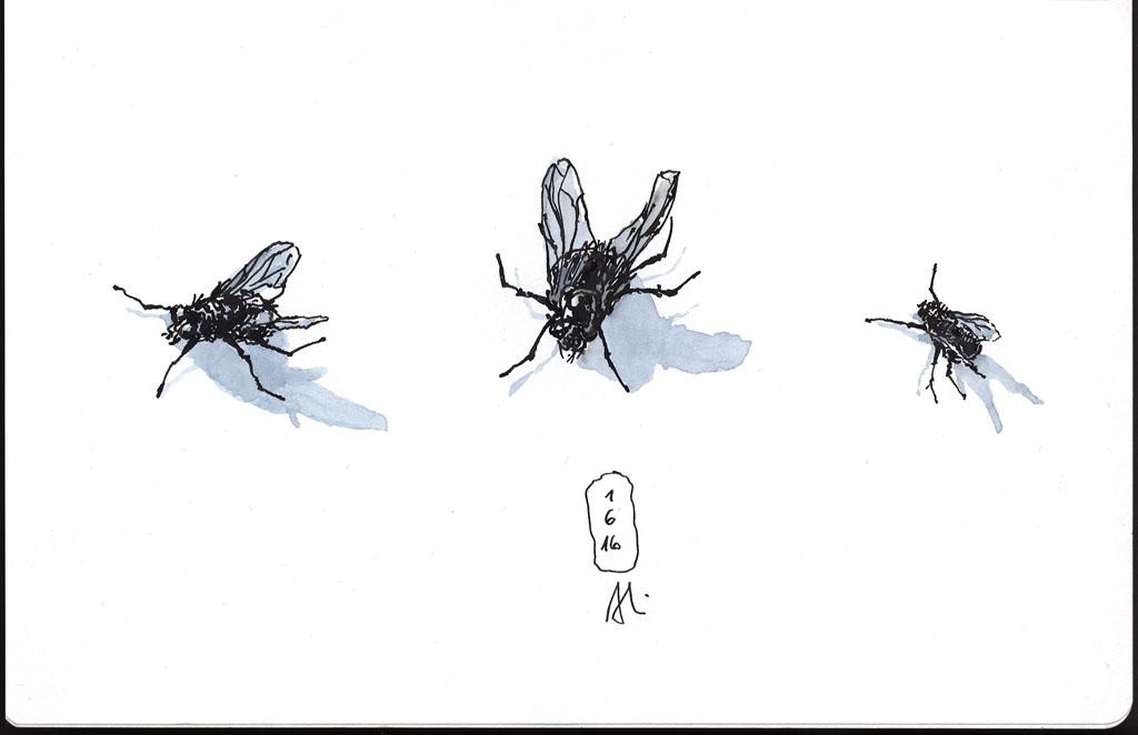 16-06-01_Fliege-