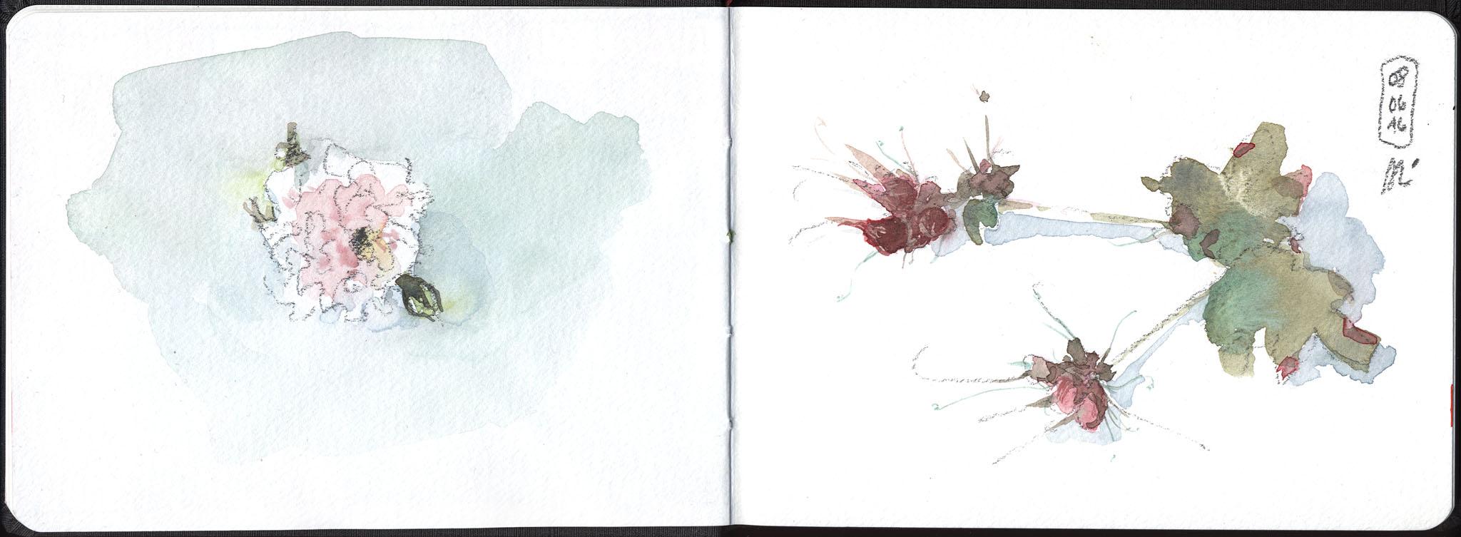 16-06-08_Rosaceae-