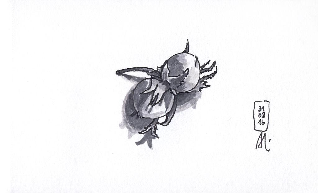 16-08-31_Haselnüsse 3-